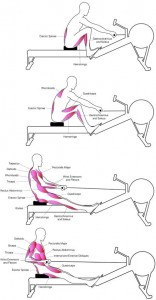 muscles used in indoor rowing